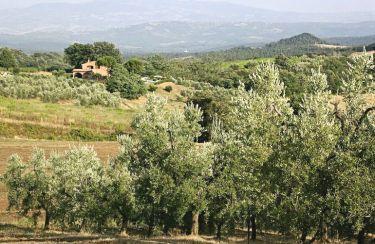 Vista dalla casa vacanze Affitto Villa  55549 Roccastrada