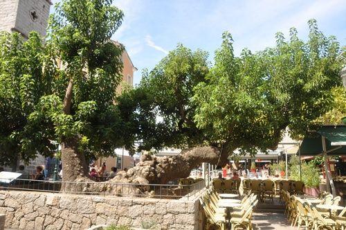 Affitto Appartamento 82380 Porto Vecchio