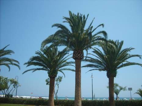Vista nelle vicinanze Affitto Appartamento 88815 Alba Adriatica