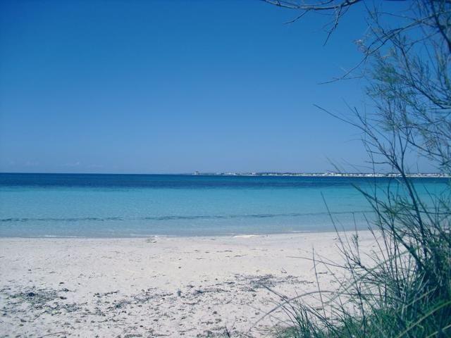 Vista nelle vicinanze Affitto Villa  78087 Porto Cesareo