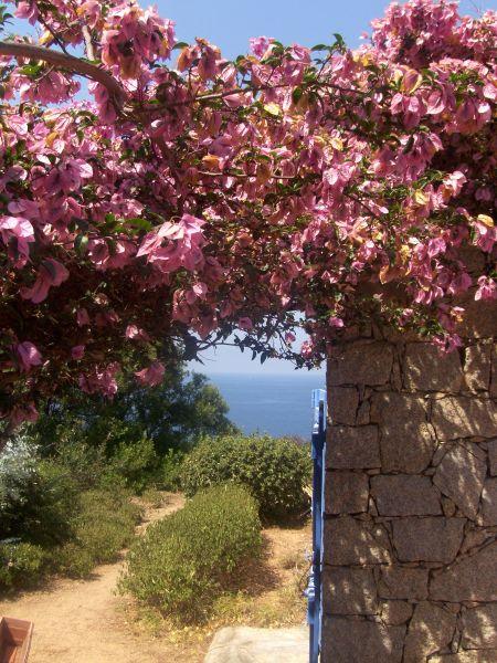 Vista esterna della casa vacanze Affitto Villa  105031 Ajaccio