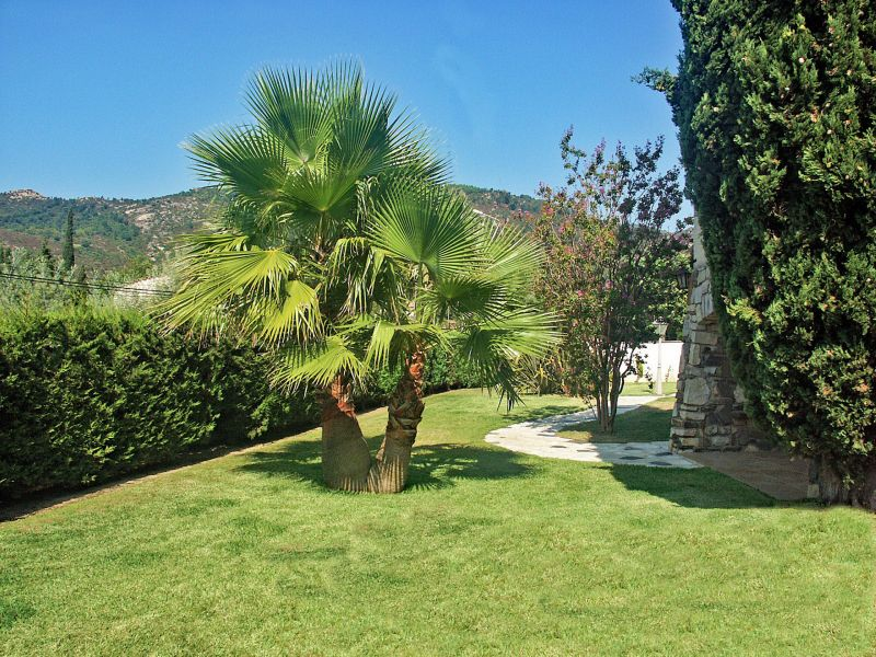 Giardino Affitto Villa  109162 Saint Tropez