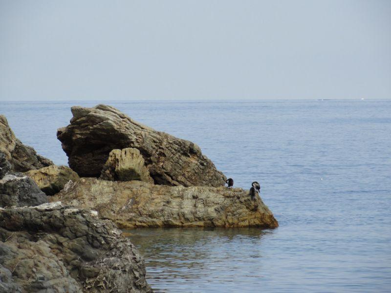Vista nelle vicinanze Affitto Appartamento 102481 Rio nell'Elba