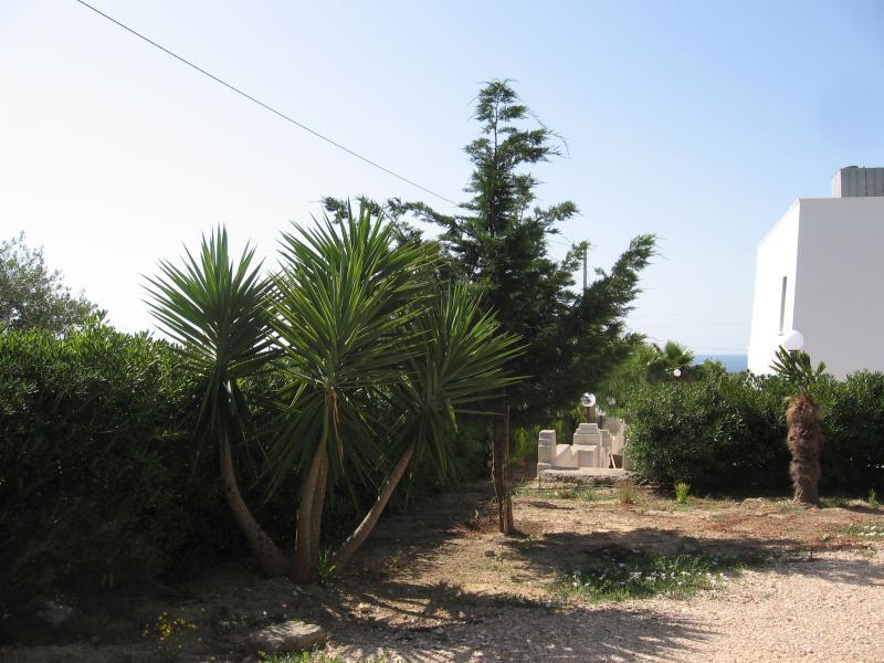 Giardino Affitto Villa  71621 Pescoluse