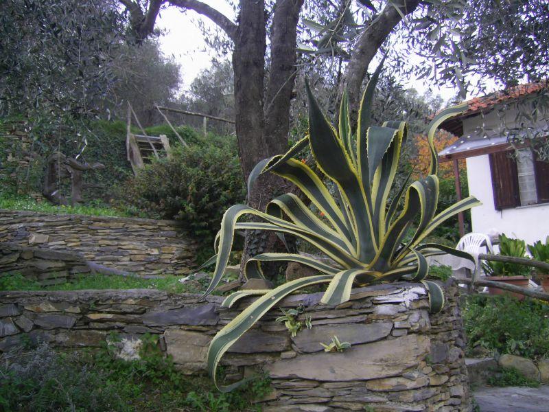 Giardino Affitto Agriturismo 80842 Dolcedo