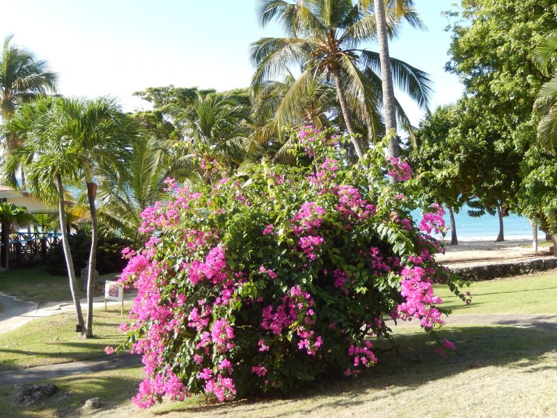 Spiaggia Affitto Appartamento 82066 Saint Francois