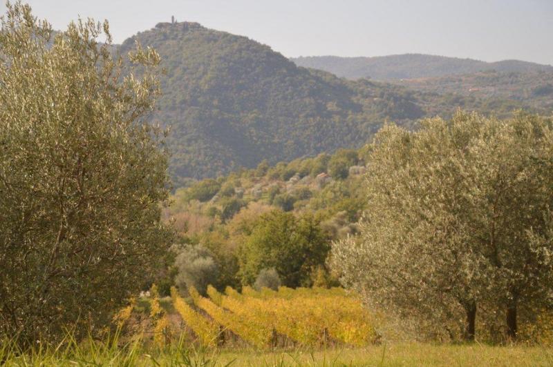 Vista nelle vicinanze Affitto Casa 14841 Montalcino