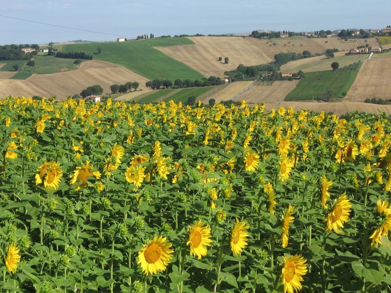 Vista dalla casa vacanze Affitto Agriturismo 17670 Macerata