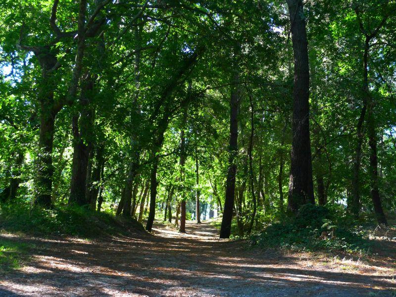Vista nelle vicinanze Affitto Casa mobile 31432 Biscarrosse