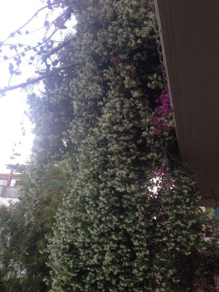 Affitto Appartamento 40987 Alba Adriatica