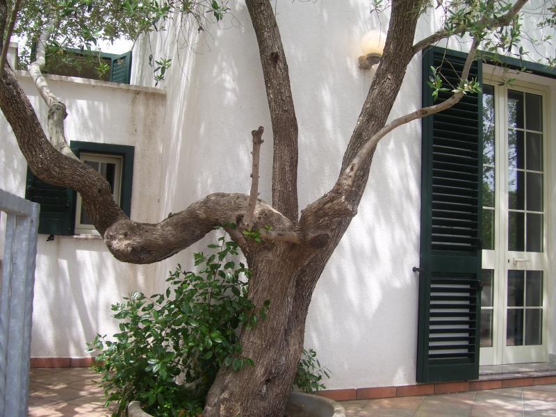 Cortile Affitto Villa  44776 Gallipoli