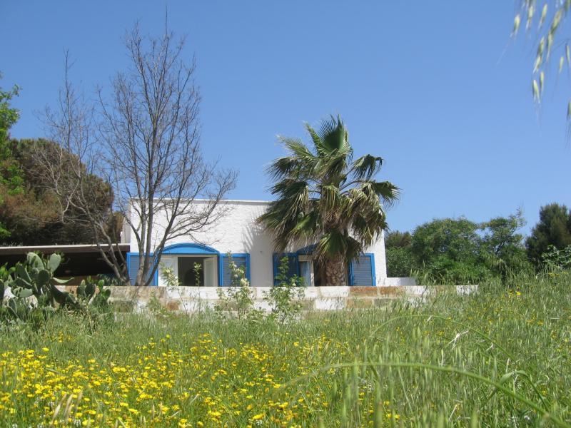 Affitto Casa 45348 Pescoluse