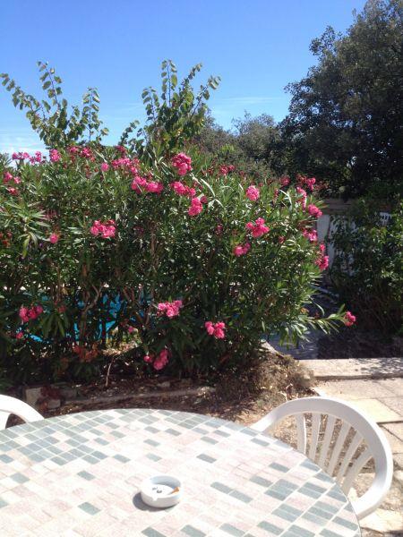 Vista dal terrazzo Affitto Casa 48095 Cassis