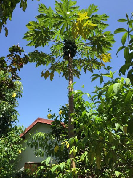 Vista nelle vicinanze Affitto Bungalow 8003 Gosier (Guadalupa)