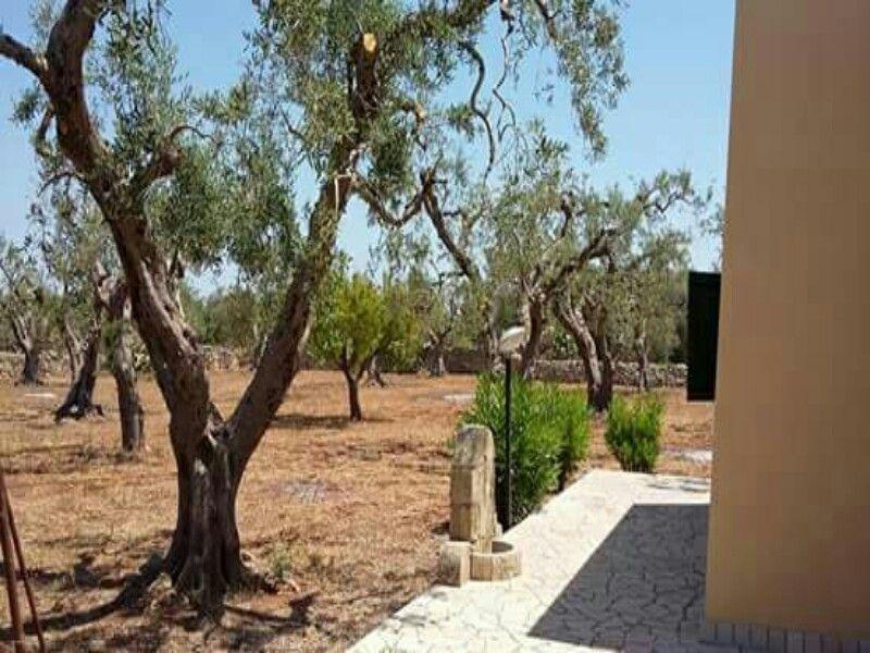 Giardino Affitto Appartamento 114748 Santa Maria di Leuca
