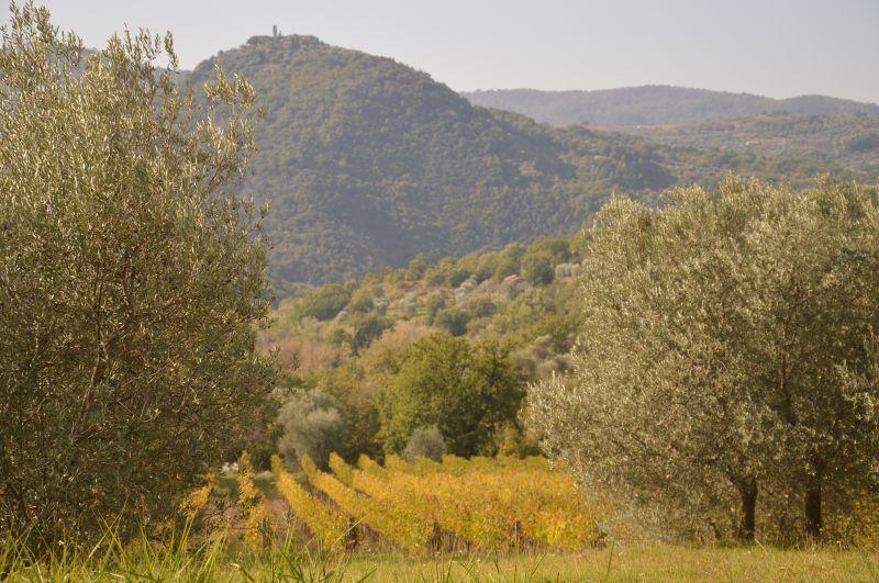 Vista nelle vicinanze Affitto Appartamento 74222 Montalcino