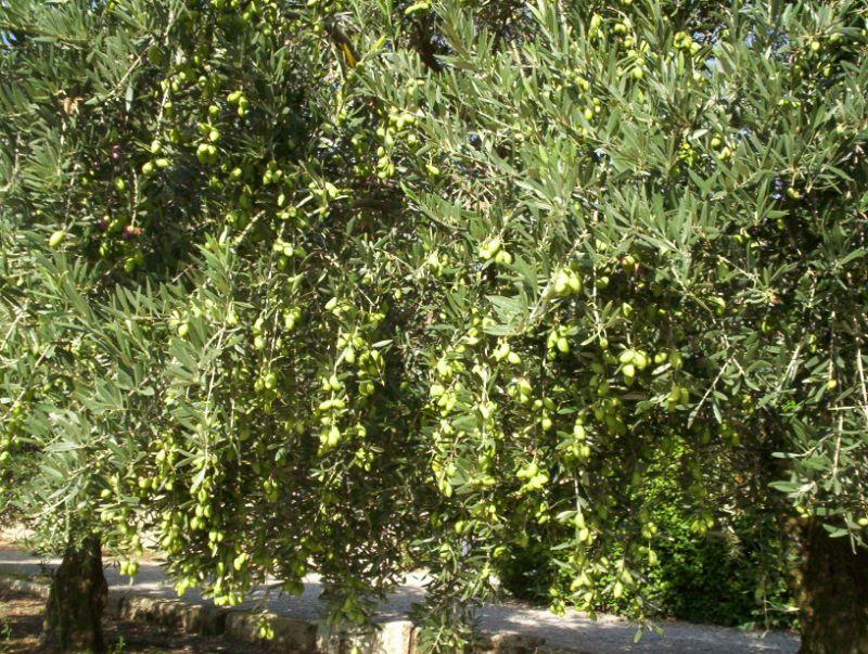 Vista dalla casa vacanze Affitto Agriturismo 68513 Montpellier