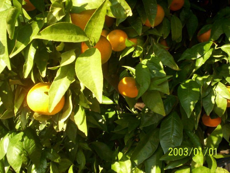 Vista nelle vicinanze Affitto Agriturismo 68513 Montpellier