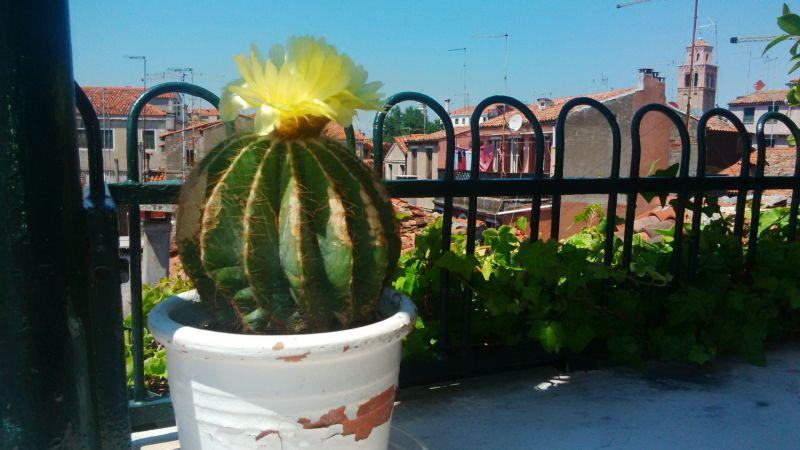 Vista dal balcone Affitto Appartamento 86011 Venezia