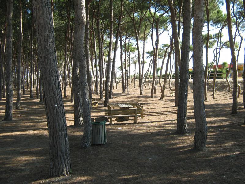 Vista nelle vicinanze Affitto Appartamento 64221 Alba Adriatica