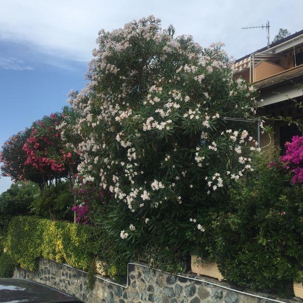 Vista esterna della casa vacanze Affitto Appartamento 75601 Levanto