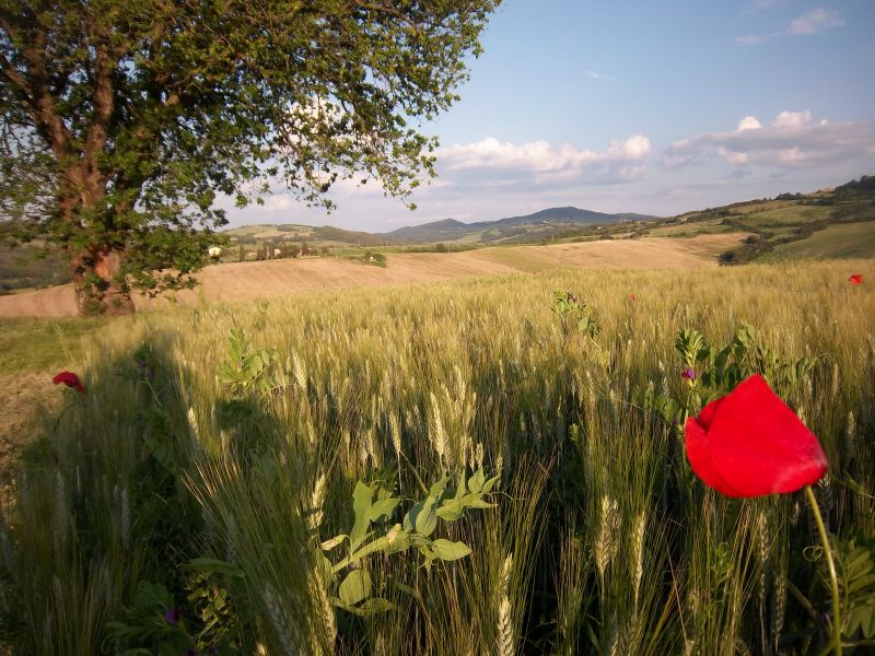 Altra vista Affitto Agriturismo 106681 Volterra