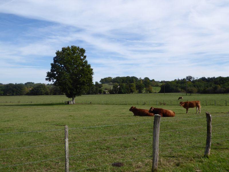 Vista nelle vicinanze Affitto Agriturismo 111984 Bergerac