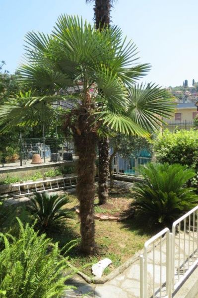 Giardino Affitto Villa  83469 Rapallo