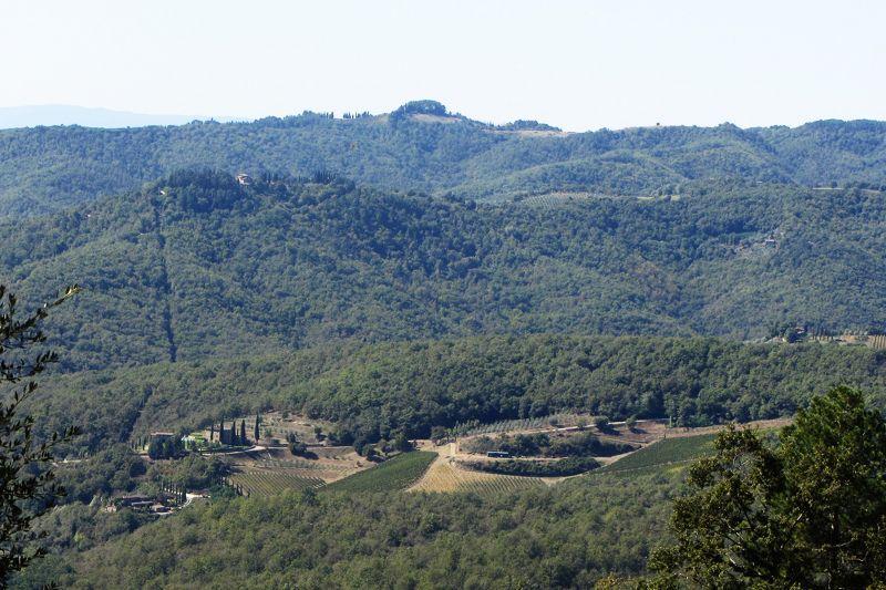 Vista dalla casa vacanze Affitto Agriturismo 109624 Siena