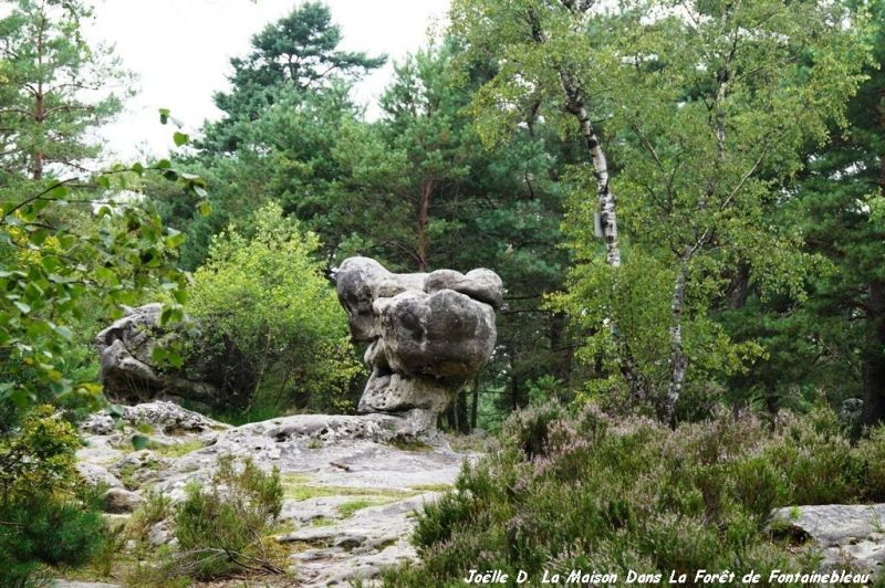 Altra vista Affitto Casa 117595 Fontainebleau