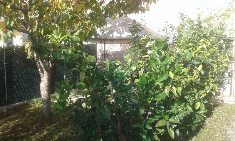 Giardino Affitto Appartamento 119098 Giulianova