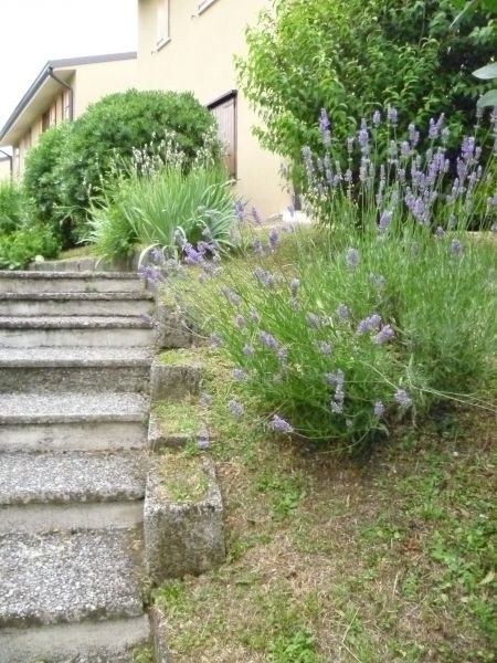 Giardino Affitto Appartamento 63981 Manerba del Garda