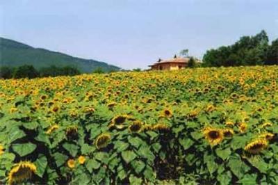 Vista dalla casa vacanze Affitto Agriturismo 80832 Gavorrano