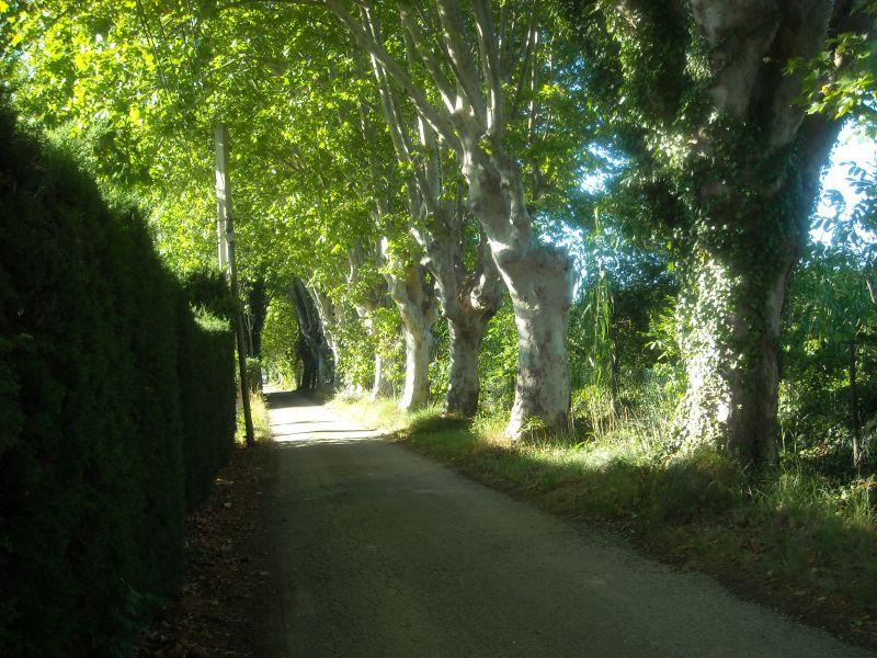Vista esterna della casa vacanze Affitto Casa 84879 Saint Rémy de Provence