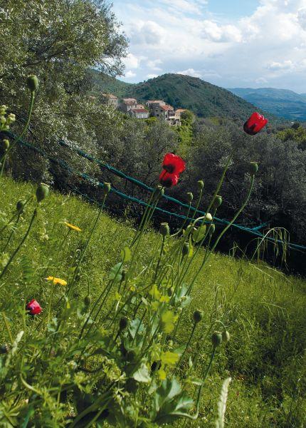 Vista nelle vicinanze Affitto Agriturismo 112645 Sainte Lucie de Tallano