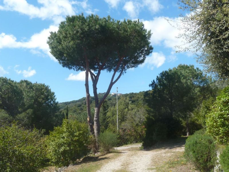 Giardino Affitto Appartamento 115069 Campo nell'Elba