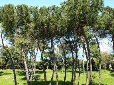 Vista dalla casa vacanze Affitto Appartamento 87229 Pescara