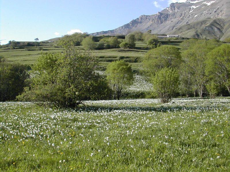 Vista nelle vicinanze Affitto Chalet 113346 Villar-d'Arêne