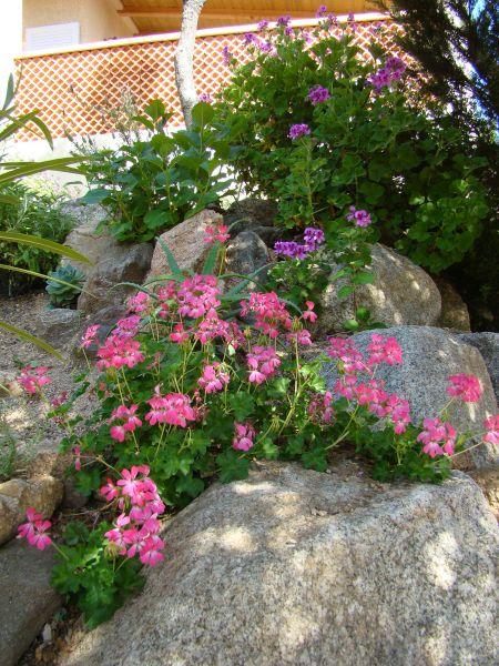 Giardino Affitto Villa  79457 Propriano